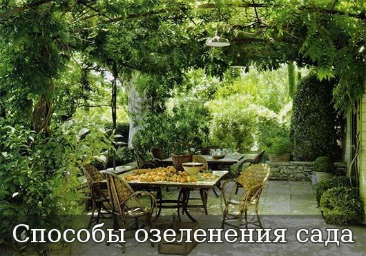 Способы озеленения сада